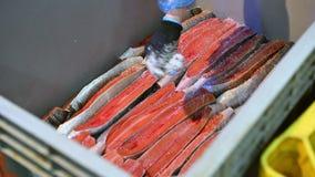 Fábrica de los pescados de mar almacen de video