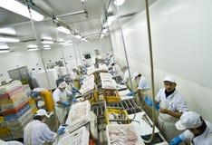 Fábrica de proceso de los pescados Foto de archivo libre de regalías