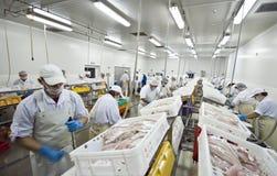 Fábrica de processamento dos peixes Fotografia de Stock