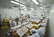 Fábrica de processamento dos peixes Fotos de Stock