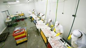 Fábrica del alimento de pescados foto de archivo libre de regalías
