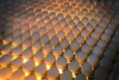 Fábrica del huevo - control de calidad mirando al trasluz foto de archivo