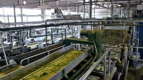 Fábrica para procesar verduras almacen de video
