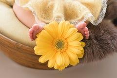 Füße eines neugeborenen Mädchens, kleine Ballerina in den flaumigen Punkten, Tänzer müde, Ballettröckchenrock, neugeboren stockfotografie