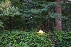Fäkta fullständigt tvinnade lösa druvor i hösten Med träd- och gatalampan Royaltyfri Fotografi