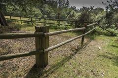 Fäkta nya Forest Hampshire UK Arkivbild