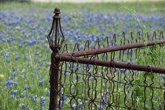 Fäkta runt om gravstenar i en södra Texas kyrkogård royaltyfria foton