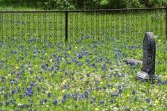 Fäkta runt om gravstenar i en södra Texas kyrkogård royaltyfri foto