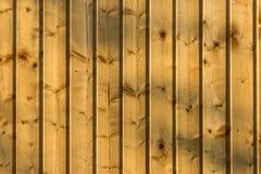 fäkta träängsommarsolrosor Arkivfoto