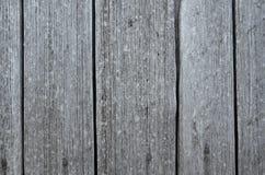 fäkta träängsommarsolrosor Arkivbilder
