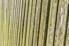 fäkta träängsommarsolrosor Royaltyfri Fotografi