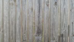 fäkta träängsommarsolrosor Bakgrund textur Arkivfoto