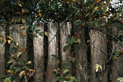 fäkta träängsommarsolrosor Den gammala grå färg stiger ombord spelrum med lampa Ett staket på en höstdag i natur wood gammala pla Royaltyfri Foto