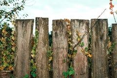 fäkta träängsommarsolrosor Den gammala grå färg stiger ombord spelrum med lampa Ett staket på en höstdag i natur wood gammala pla Royaltyfria Foton
