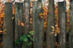 fäkta träängsommarsolrosor Den gammala grå färg stiger ombord spelrum med lampa Ett staket på en höstdag i natur wood gammala pla Arkivbilder