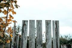 fäkta träängsommarsolrosor Den gammala grå färg stiger ombord spelrum med lampa Ett staket på en höstdag i natur wood gammala pla Royaltyfri Bild