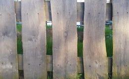 fäkta träängsommarsolrosor spelrum med lampa textur Arkivfoto