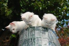 fäkta trädgårds- kattungar rullar överkant tre Royaltyfri Fotografi
