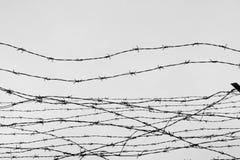 fäktning förse med en hulling stakettråd låtet arrest taggar _ En fånge Förintelsekoncentrationsläger fång Deprimerande backgr Royaltyfri Fotografi