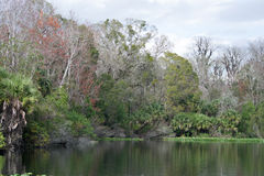 Fäll ned den Wekiva floddelstatsparken, Florida, USA Arkivfoton