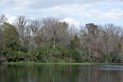 Fäll ned den Wekiva floddelstatsparken, Florida, USA Arkivfoto