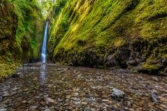 Fäll ned Oneonta nedgångar i den Columbia River klyftan, Oregon Arkivbild