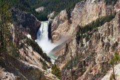 Fäll ned Yellowstone nedgångar i den Yellowstone nationalparken Arkivfoto