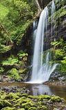Fälle Russel Tasmania Vertical Lizenzfreies Stockbild