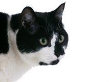 Fällige aufmerksame Schwarzweiss-Katze Stockfotos