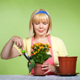 Fällige Hausfrau kümmert sich um den Blumen Stockbild
