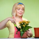 Fällige Hausfrau kümmert sich um den Blumen Stockfotografie