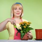 Fällige Hausfrau kümmert sich um den Blumen Stockfoto