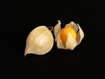Fälliges Tomatillos/Physalis Lizenzfreies Stockbild