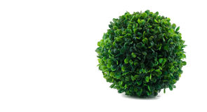 Fälschung lokalisierter einzelner grüner Busch Lizenzfreie Stockfotos
