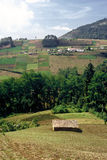 fält öppna guatemala Royaltyfria Foton