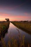 fält över ricesolnedgång Royaltyfri Fotografi