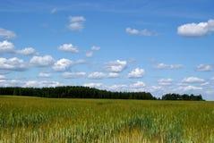 fält över skyen Royaltyfri Bild