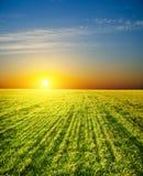 fält över solnedgång Arkivbilder