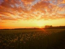 fält över solnedgång Royaltyfria Foton