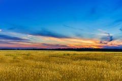 fält över solnedgångvete Royaltyfri Bild