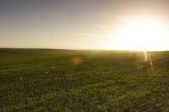 fält över soluppgång Royaltyfri Bild