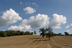 fält 2 Royaltyfria Foton