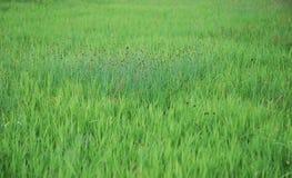 fält Arkivbild