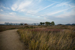 Fält Arkivfoton
