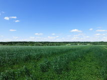Fält Fotografering för Bildbyråer