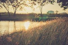 Fält av att blåsa gräs Royaltyfri Fotografi