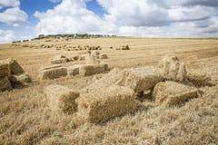 Fält av baler av hö på en sommardag Arkivfoton