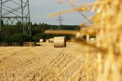 Fält av baler av vete Royaltyfri Foto