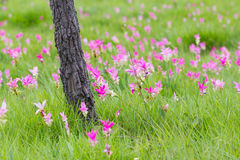 Fält av blomman Arkivfoton