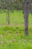 Fält av blomman Arkivbild